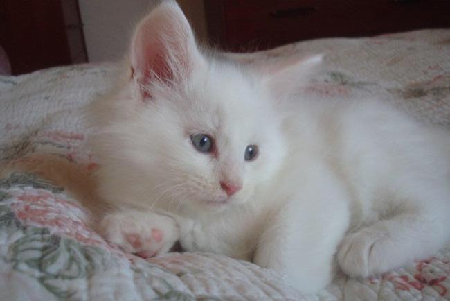 BiancoBello